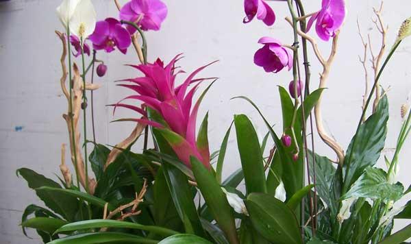 Location de décoration florale